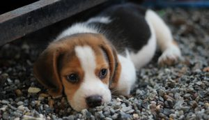 Nutrition For Your Puppy