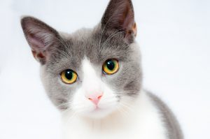 Las Vegas Cats Up For Adoption